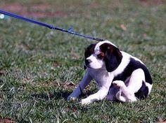 Een nieuwe hond, wel of niet naar hondenschool? Waarom een hondenschool zo belangrijk is voor het opvoeden van je nieuwe puppy.