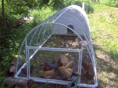 PVC Pipe Chicken Tractor - cheap and lightweight FTW!