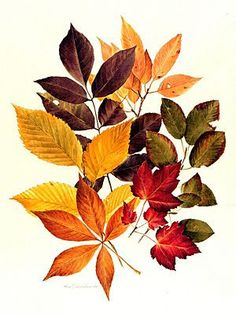 Here we go, girls! This is the color pallette that I LOVE! It's the fall colors but not the bright orange/re… Flowers Illustration, Autumn Illustration, Botanical Illustration, Watercolor Illustration, Watercolor Paintings, Autumn Art, Autumn Leaves, Autumn Tattoo, Thanksgiving Art