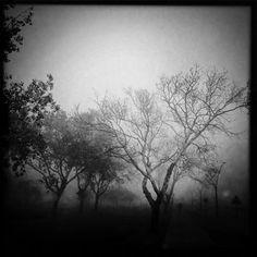"""Aníbal Greco: """"Saqué esta foto durante una caminata por la ribera del río en Vicente López. Venía de una cobertura y me bajé del auto para registrar imágenes de la niebla. Suelo fotografiar lo que veo en la calle"""""""