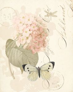 vintage, paper, flowers, butterfly, writing