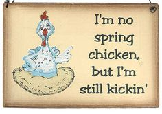 "Chicken Wood Signs | no spring chicken..."" Wooden Sign"