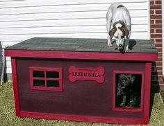 Shea & Lexi - Oklahoma:  several years of being tried and tested, this dog house has been proven to be the most comfortable and the safest home you can build for your beloved dogs.