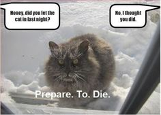 Poor cat! lol