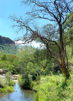 Campsites in belfast Mpumalanga. Renowned for its excellent trout fishing conditions. Come and find a campsite SA Campsites Trout Fishing, Nature Reserve, Belfast, Campsite, South Africa, River, Road Trips, Outdoor, Camping