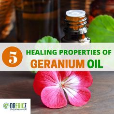Geranium Essential Oil Uses: 5 Healing Properties Primarily used by inhalation & topical, geranium essential oil uses and benefits are powerful, therapeutic & also relatively gentle & safe. Essential Oils For Colds, Essential Oil Uses, Young Living Essential Oils, Pure Essential, Geranium Oil, Geranium Essential Oil, Doterra Geranium, Plant Therapy, Herbal Oil