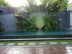 fan palm Courtyard