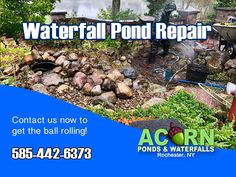 Acorn has the expertise necessary to properly diagnose and repair pond leaks, fix your waterfalls, skimmers, pumps and plumbing, as well as control algae and water clarity issues in and around the Rochester & Western NY areas near you! Garden Fountains, Garden Pond, Water Garden, Pond Cleaning, Pond Maintenance, Rochester New York, Pond Waterfall, Pond Water Features, Finger Lakes