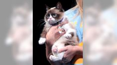 The owner of famous Grumpy Cat awarded over $700000 in a copyright infringement lawsuit   The owner of famous Grumpy Cat awarded over $700000 in a copyright infringement lawsuit  January 25 2018 by Dunja Djudjic Leave a Comment   I guess we all know the viral Grumpy Cat the spirit animal of many of us (especially on Monday mornings). In 2015 a beverage company used Grumpy Cats name and image without a license and the kittys owner Tabatha Bundesen decided to file a lawsuit. On Monday the…