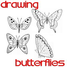 Step howtodrawbutterflies1 Butterfly Drawing Easy Methods : How to Draw Butterflies Step by Step