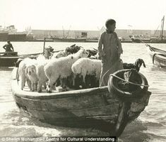 Livestock are transported by dhow from Deira to Bur Dubai
