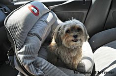 A Safer and Quieter Car Trip with the Air PupSaver ~ Tenacious Little Terrier {sponsored}