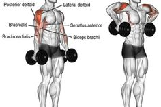 A compound pull exercise. Muscles worked: Lateral deltoid Posterior Deltoid Supraspinatus Brachialis Brachioradialis Biceps Brachii Middle and Lower Trapezii Serratus Anterior Infraspinatus and Teres Minor. Fitness Workouts, Gym Workout Tips, Dumbbell Workout, Fitness Tips, Fitness Motivation, Deltoid Workout, Dumbbell Exercises, Training Exercises, Exercises For Deltoids