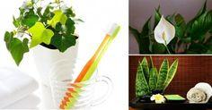 Plantas para el baño.. Lee más sobre: Permacultura en La bioguía.