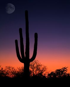 I have seen this same image hiking at Verrado.  I love AZ sunsets!