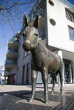The Donkey Statue in my birthplace Heemskerk in the Netherlands