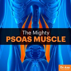 Psoas muscle - Dr. Axe http://www.draxe.com #health #holistic #natural