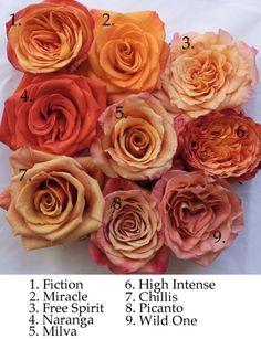 Orange rose varieties by Harvest Roses NYC Orange Wedding Flowers, Orange Flowers, Love Flowers, Colorful Flowers, Fleur Orange, Rose Orange, Orange Rose Bouquet, Peach Rose, Orange Rosen