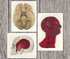 Systems of the Human Head Poster Set | 18 Macabre Medical Crafts You CanOwn