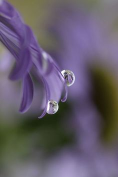 Water Drop Photography, Art Photography, Levitation Photography, Exposure Photography, Dew Drops, Rain Drops, Foto Macro, Drip Drop, Fotografia Macro