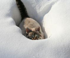 er......I think i underestimated the depth of snow