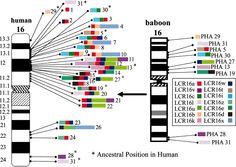 Human Genome Img