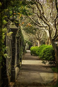 """""""Iron Gate And Crepe Myrtle"""" by Kristina Austin Scarcelli"""