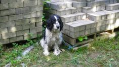 Justice for blind dog tied to pallet of bricks and left to perish without food and water!   YouSignAnimals.org