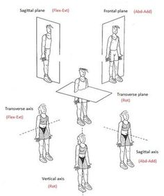 Axis of Rotation Anatomy | human body axis 1 transverse axis this axis goes from