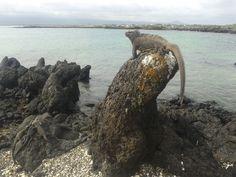 Tintoreras, Isla Isabella- Galápagos
