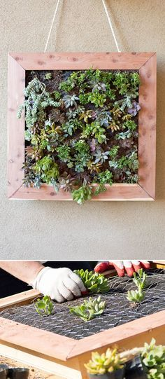 Turn plants into art you can hang from your wall with this DIY vertical succulent garden Vertical Succulent Gardens, Succulent Wall Art, Succulent Gardening, Organic Gardening, Succulent Planters, Gardening Blogs, Vertical Planter, Gardening Quotes, Garden Planters