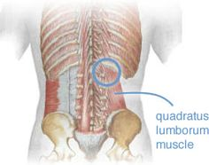 Massage Therapy for Low Back Pain (#2) (I see this with clients -- and suffer from QL issues myself! -cg)