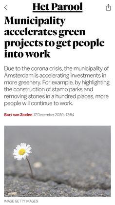 Amsterdam, Greenery, News