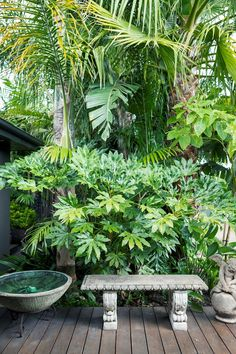 John Couch has created a tropical garden in Melbourne& south eas. Landscaper John Couch has created a tropical garden in Melbourne's south eas., Landscaper John Couch has created a tropical garden in Melbourne's south eas. Small Tropical Gardens, Tropical Garden Design, Tropical Landscaping, Tropical Plants, Landscaping Ideas, Small Gardens, Small City Garden, Inexpensive Landscaping, Garden Landscaping