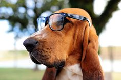 Man's best friend is one of us! (We bet he's got a solid background in HTML, too.)