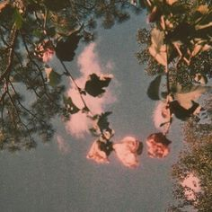 Uploaded by Artemis Granger. Find images and videos about pretty, vintage and aesthetic on We Heart It - the app to get lost in what you love. Flower Aesthetic, Aesthetic Vintage, Nature Aesthetic, Aesthetic Grunge, Gun Aesthetic, 1950s Aesthetic, Rose Gold Aesthetic, Angel Aesthetic, Summer Aesthetic
