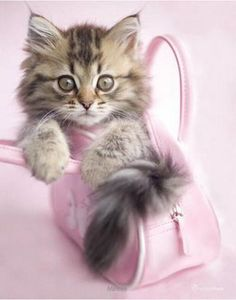 sweet kitty in a pink purse . . .