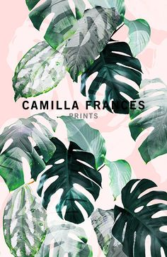 { tropical print - monstera leaf in pink background } Camilla Frances prints