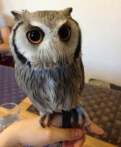 London opens a bar where you can pet owls | Awesomelycute - Cute Kittens, Cute Puppies, Cute Animals, Cute Babies and Cute Things in General