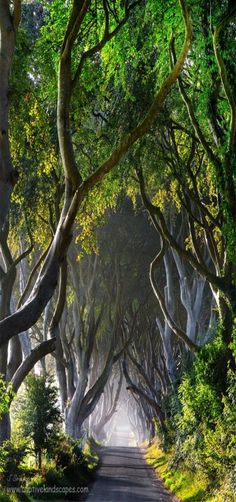 Green Hedges, Isle of Skye, Scotland | by Stephen Emerson on 500px These trees are credited with being many different places - some of these photos are in Northern Ireland and called the Dark Hedges, I've seen others where they're somewhere in England, now they've moved to Skye - these hedges LOOK magical and must be in order to move about the way they do!!