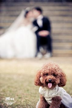 Happy to take Pre Wedding with their Pets!Pre-Wedding Shooting @ Hong Kong - photo by Eunice K.