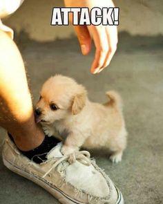 I'll get you!