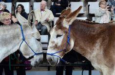 Where's the love for donkeys?