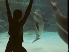 """Entertaining a Dolphin - It's a delightful video, but many news outlets were in fantasy land when they told their viewers that this dolphin at SeaWorld, Orlando, was """"laughing"""" when she stopped to watch a girl doing acrobatics in the window."""