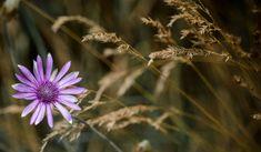 #bloom #blossom #flora #flower #grass #macro #nature #wild flower