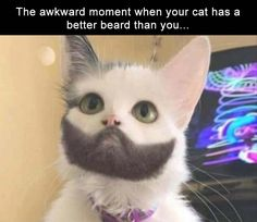 34 Funny Memes And Pictures Of The Day