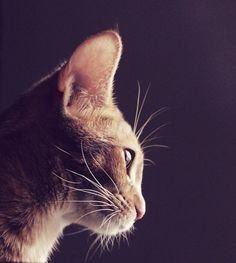 whiskers by Andrea Kim on 500px