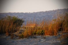 meadow on the beach News Blog, Sauce Recipes, Places To Visit, Pasta, Beach, Travel, Image, Viajes, The Beach