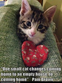 One small cat changes.....