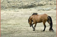 Black Hills Wild Horse Sanctuary. I really want to go there!